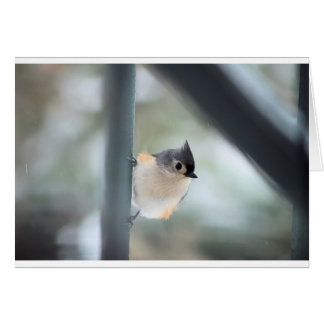 """Tufted Titmouse On A Snowy Morning"" Card"