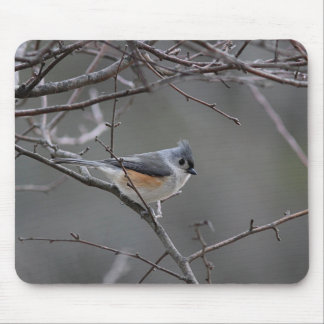 Tufted titmouse photography mouse pad