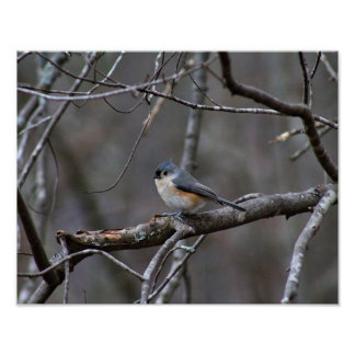 Tufted Titmouse Stillwater Maine II Poster