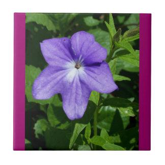 Tuile bleue de fleur de jardin petit carreau carré