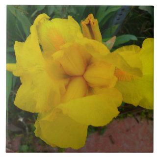 Tuile de fleur d'iris jaune grand carreau carré