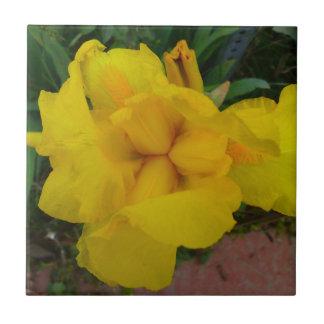 Tuile de fleur d'iris jaune petit carreau carré