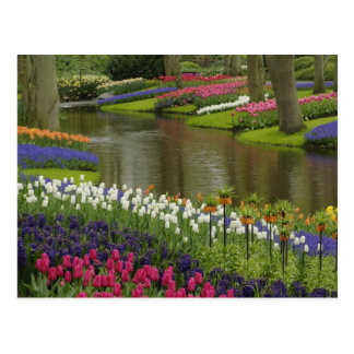 Tulip and hyacinth garden, Keukenhof Gardens, 2 Postcard