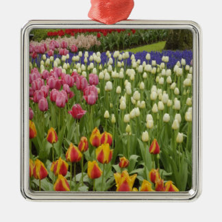 Tulip and hyacinth garden, Keukenhof Gardens, Silver-Colored Square Ornament