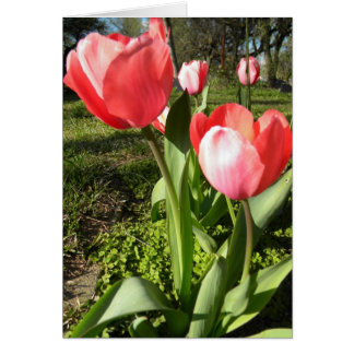 TULIP BLANK NOTE CARD