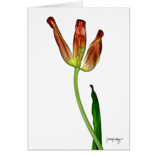 """Tulip"" by J. Maya Luz Card"