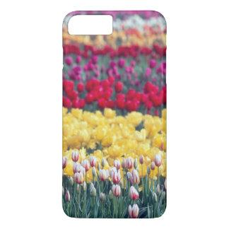 Tulip display garden in the Skagit valley, iPhone 7 Plus Case