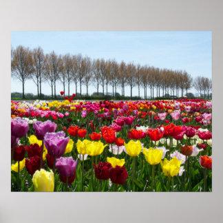 Tulip dreams poster