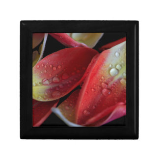 Tulip Embers Gift Box