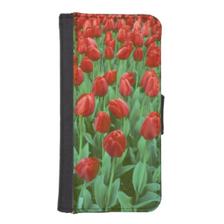 Tulip field blooms in the spring. iPhone SE/5/5s wallet case