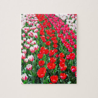 Tulip field with various red tulips in rows jigsaw puzzle