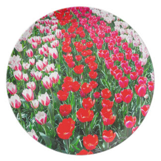 Tulip field with various red tulips in rows plate