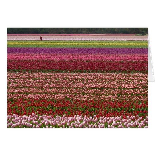 Tulip fields inspiration card