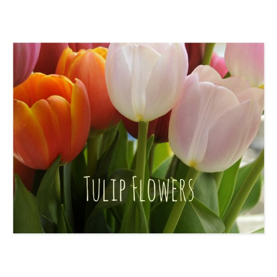 Tulip Flowers in Spring Postcard