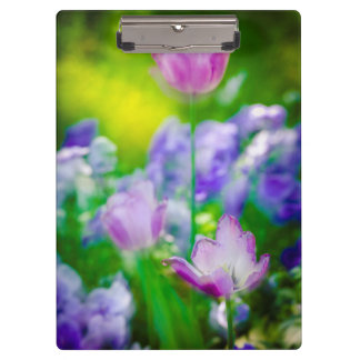 Tulip garden, Giverny, France Clipboard