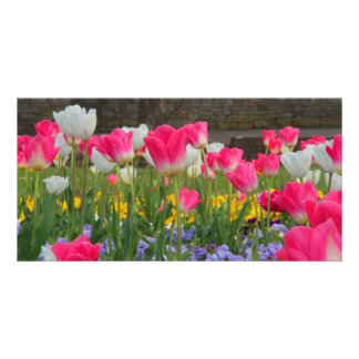 Tulip Garden Photocard Card