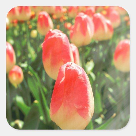 Tulip Heaven Square Sticker