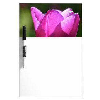 Tulip in bright light Dry-Erase boards