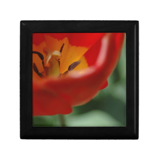 Tulip Keepsake Box, by H.A.S. Arts Gift Box
