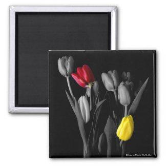 Tulip-Magnet Square Magnet