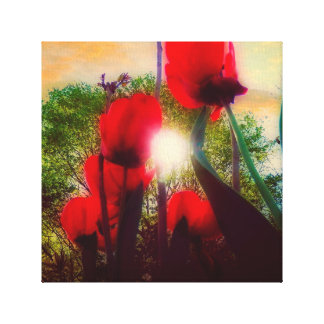 Tulip Morning Canvas Print