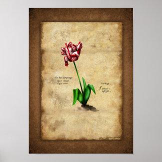Tulip (per august) poster