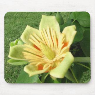 Tulip Poplar Bloom Mouse Pad