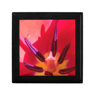 Tulip Porn Gift Box