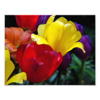 Tulip Rainbow Photo Print