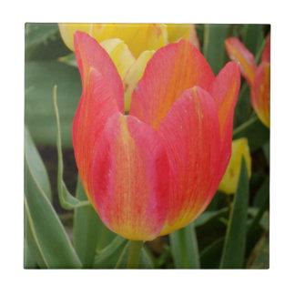 """Tulip Small (4.25"""" x 4.25"""") Ceramic Photo Tile"""
