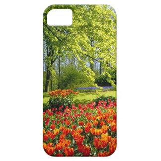 Tulip time, gardens at Keukenhof iPhone 5 Cover