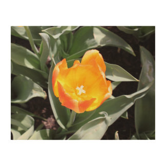 Tulip Wood Wall Art Wood Canvases