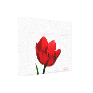 Tulip Wrapped Canvas