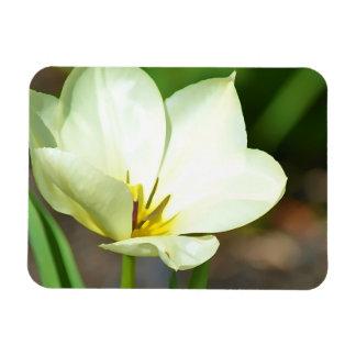 Tulipe blanche de ressort magnets en vinyle