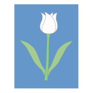 Tulipe blanche sur le bleu carte postale