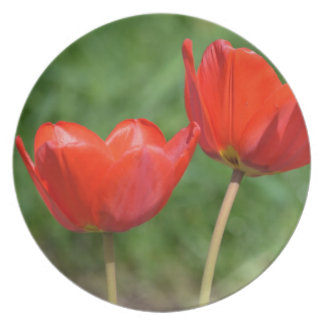 Tulipe de ressort naturel florale assiettes