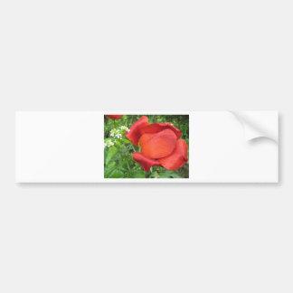 Tulipe de rouge riche et blanc doux autocollant de voiture