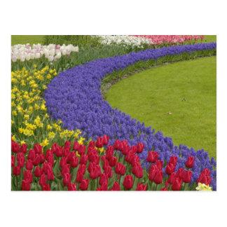 Tulipe et jardin de jacinthe et de jonquille de carte postale