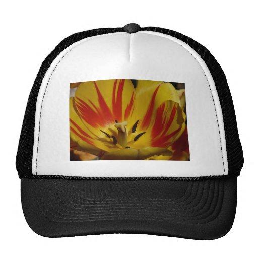 tulipe, jaune et rouge casquette