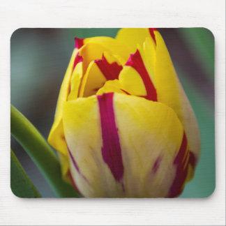 Tulipe jaune et rouge Mousepad