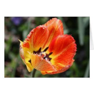 Tulipe jaune/rouge carte de vœux