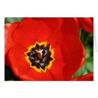 Tulipe rouge avec le centre jaune carte de vœux