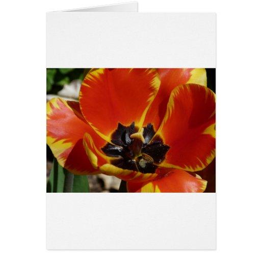 tulipe, rouge et jaune carte de vœux