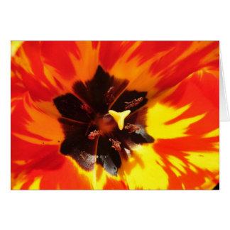 Tulipe rouge et jaune carte de vœux