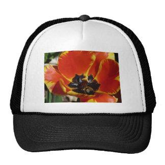tulipe, rouge et jaune casquettes