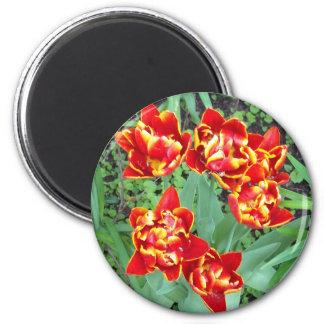 Tulipe rouge et jaune magnet rond 8 cm