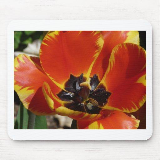 tulipe, rouge et jaune tapis de souris