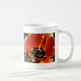 tulipe, rouge et jaune tasse