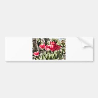 Tulipes Autocollant De Voiture