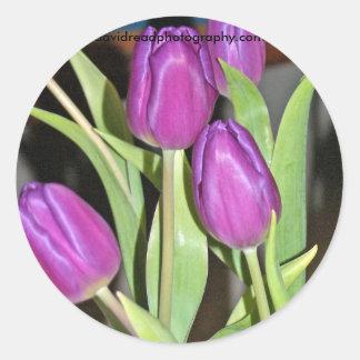 tulipes bleues, davidreadphotography.com sticker rond
